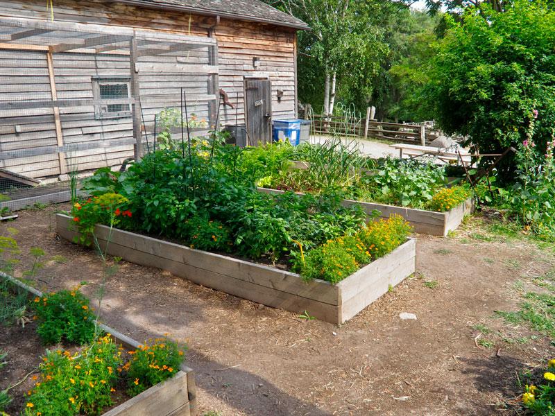 gardening raised planting beds