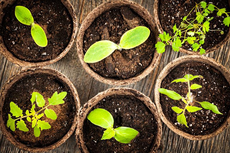gardening plants sprouts garden