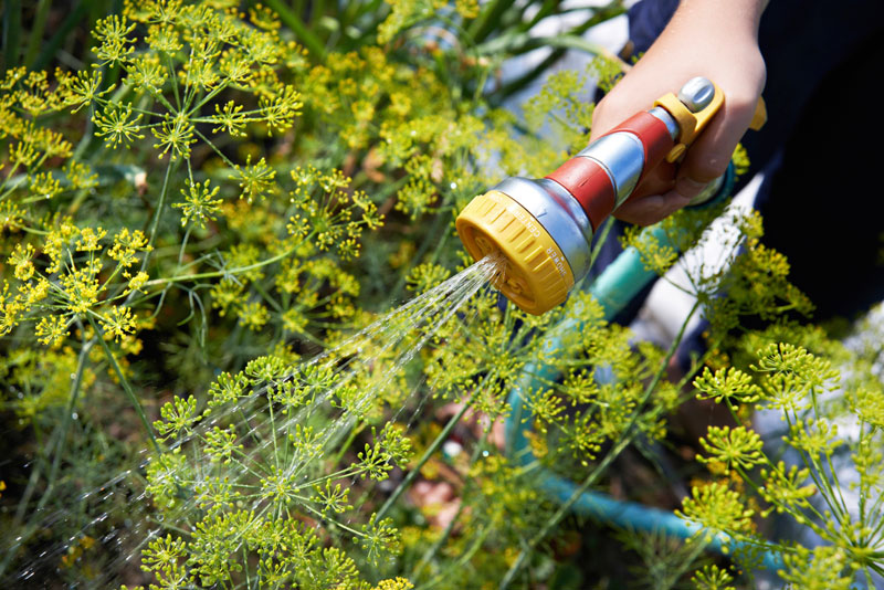 hose water plants gardening