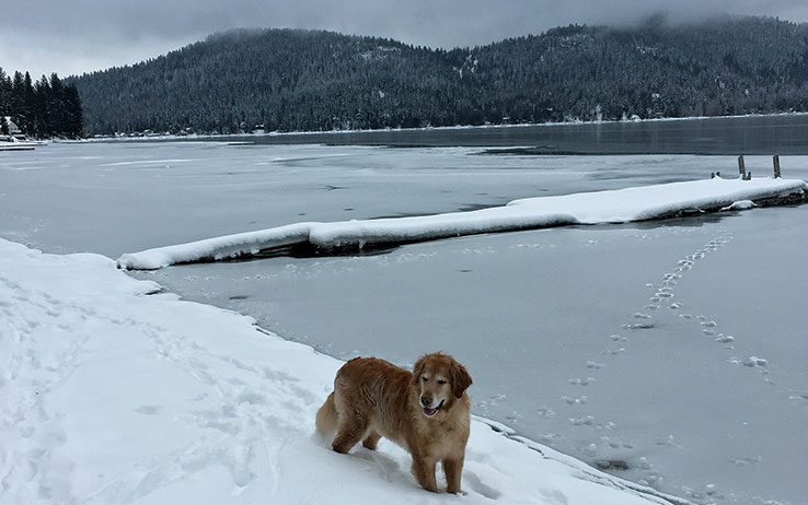 Chance-the-Dog-in-Snow