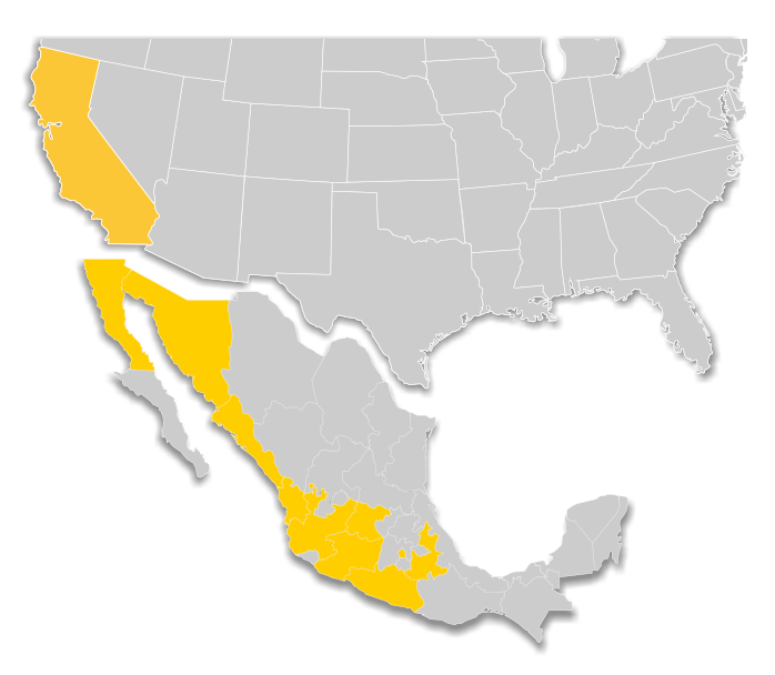 RedCoach en Mexico