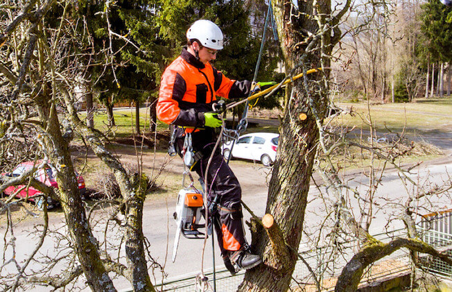 Tree surgeon cutting branches