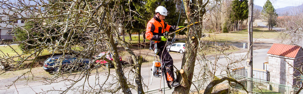 Lone worker, working on cutting branches up a tree