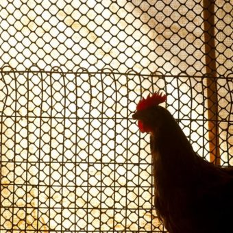 Multinational is sentenced to compensate employees who lived in chicken coop