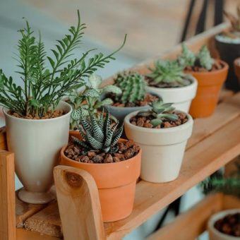 Are you going on a trip? We've listed five tips to keep your plants healthy (and alive)