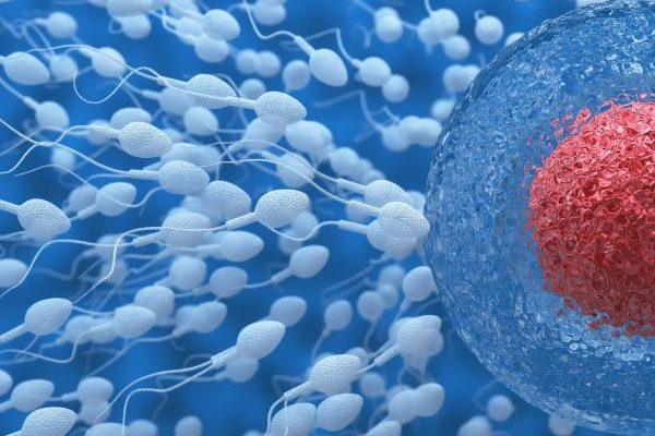 Recent study shows how the use of marijuana harms male fertility