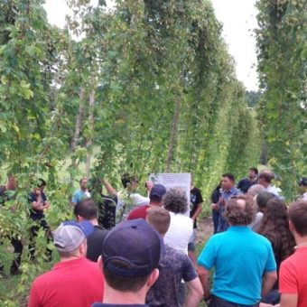 Artisanal beers spark interest in the cultivation of hop, sold by up to R$ 300 per kilogram
