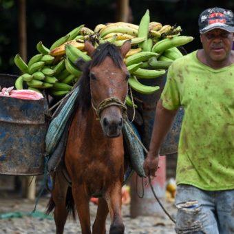 Bolsonaro prohibits import of Ecuadorian banana
