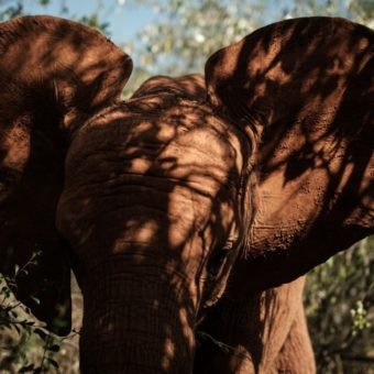 Elephant-rich nations to send leaders to Botswana summit