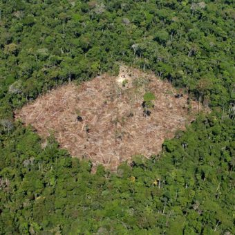 Bolsonaro dismisses data on Amazon deforestation