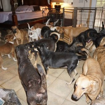 Woman rescues 97 street dogs to protect them from Hurricane Dorian