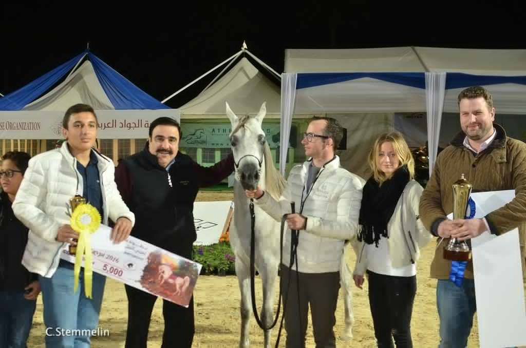 AHO Breeders' Championship Egypt 2016