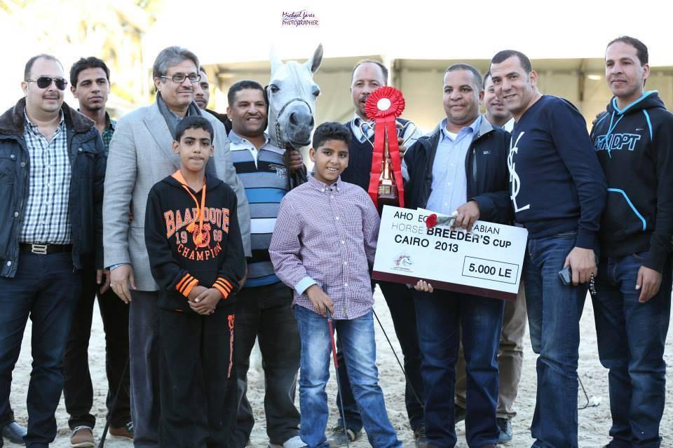 AHO Breeders' Championship Egypt 2013