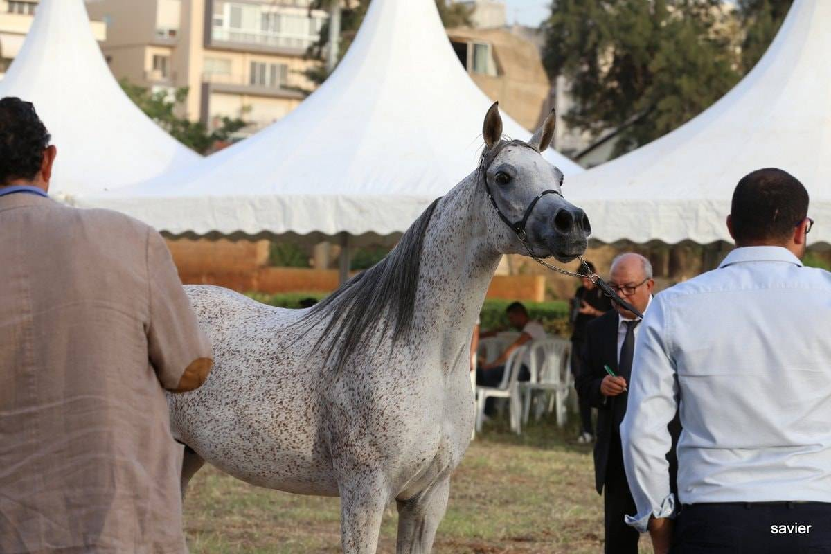Lebanon 2016