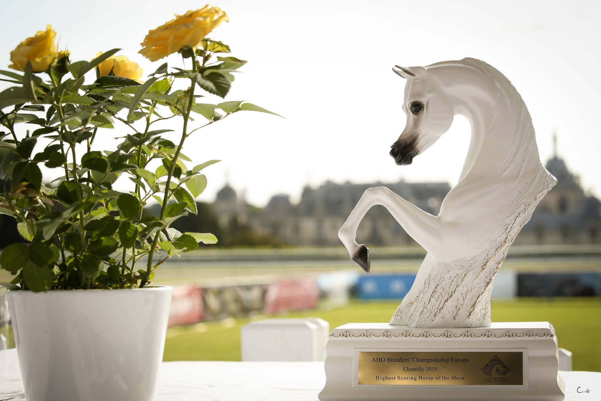 Results - AHO Breeders' Championship Europe 2019