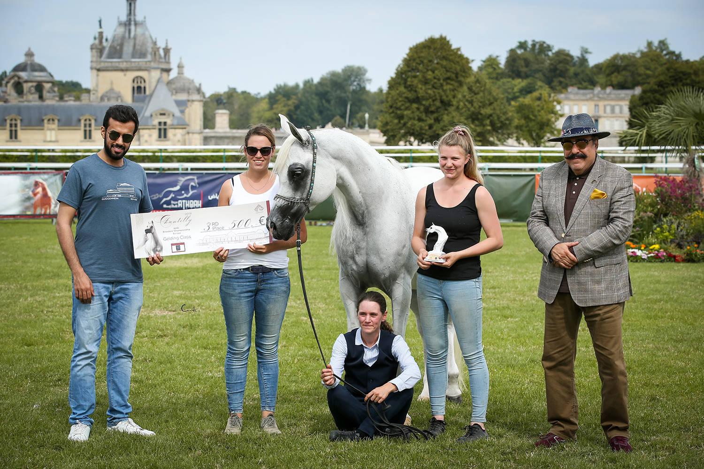 El Emando, 3rd Place Geldings sponsored by AlBidayer Stud