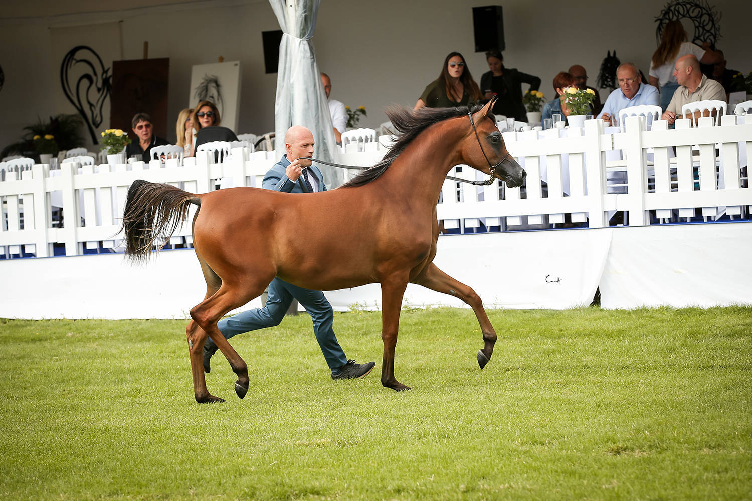 Vilma BV, Bronze Champion Yearling Filly