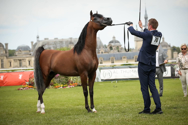 Bronze Champion Stallion, R'adjah de Cartherey