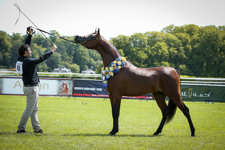 Michelangelo Regalis, Gold Champion Junior Colt