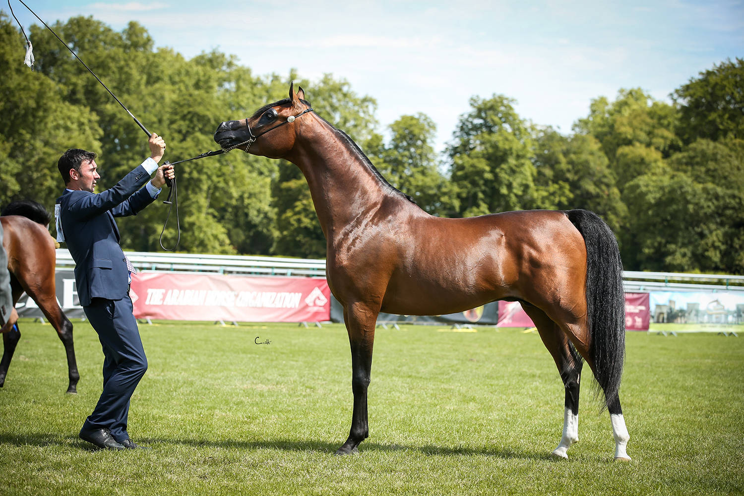 Magesty KA, Silver Champion Junior Colt