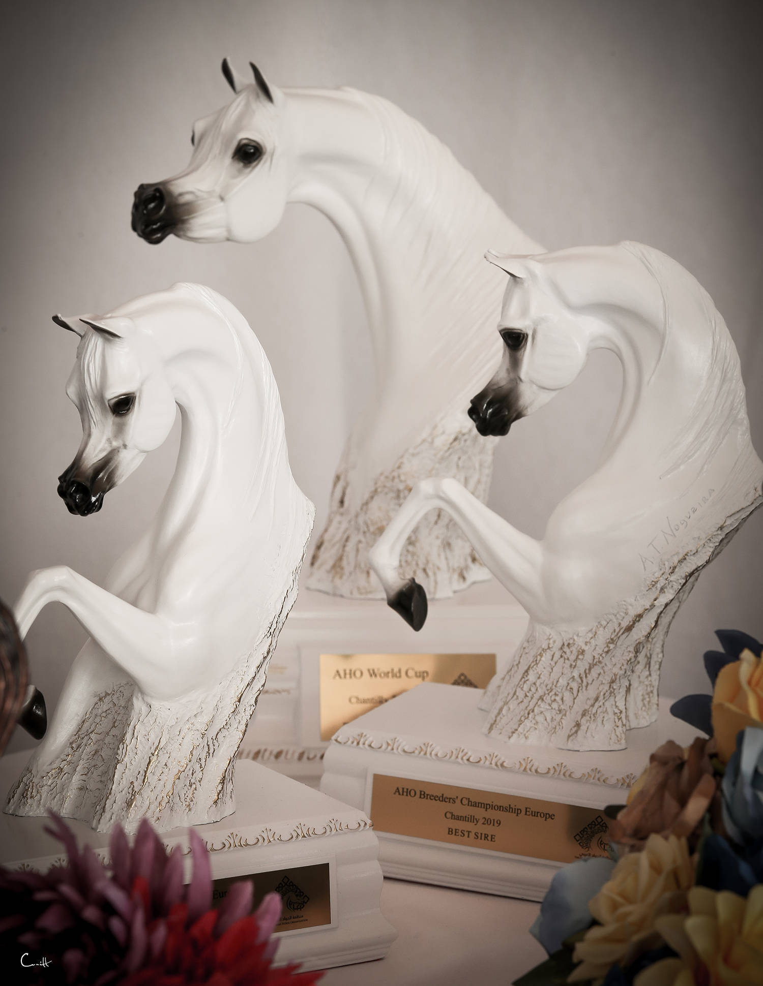 Special Trophy AHO Breeders' Championship Europe 2019 - Chantilly