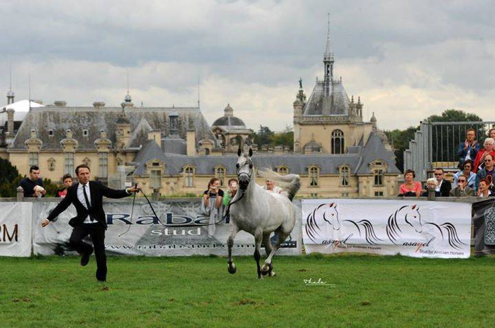 AHO Breeders' Championship Europe - Chantilly 2014