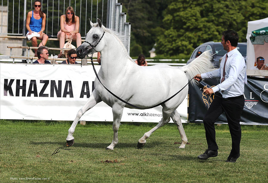 AHO Breeders' Championship Europe - Chantilly 2015