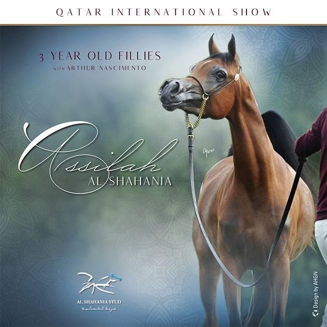 Qatar International Show