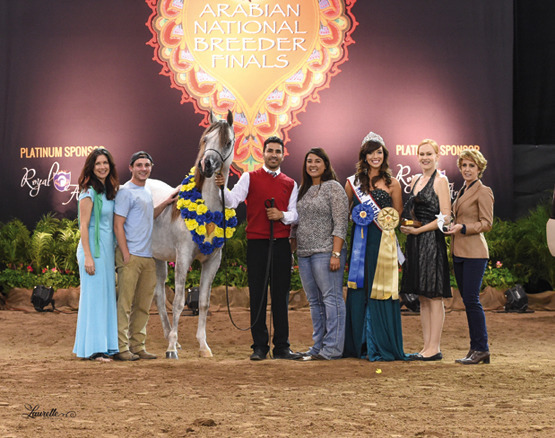 THE 2015 ARABIAN NATIONAL BREEDER FINALS