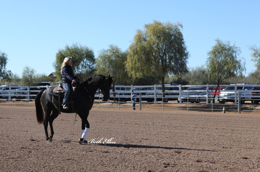 Laurie Martin Show Horses