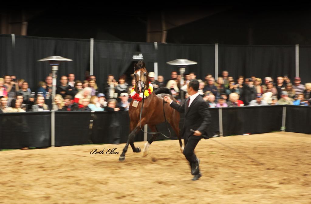 Rae-Dawn Arabians