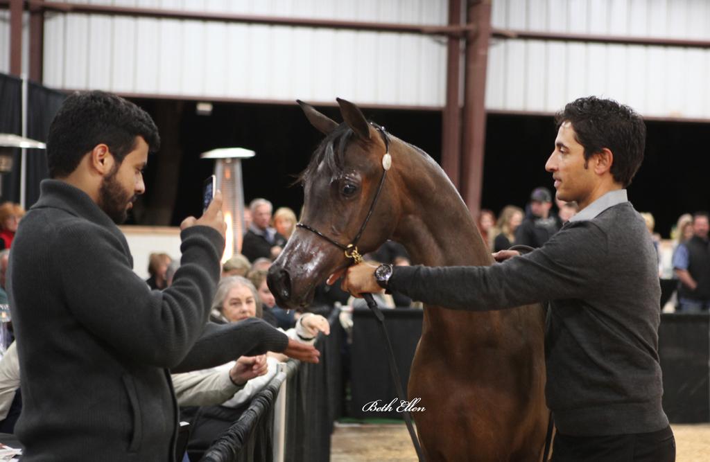 Pegasus Arabians/ Sandspur Ranch