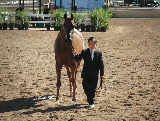 Scottsdale Arabian Horse Show News for Friday, February 12, 2016