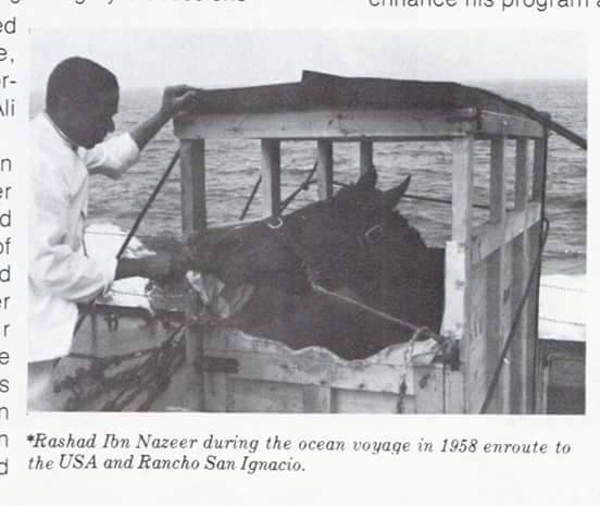 When Rashad Crossed the Atlantic