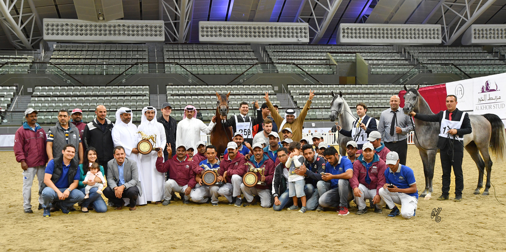 The Gold, Silver & Bronze Junior Colt Champions--all bred and owned by Al Shaqab Stud!