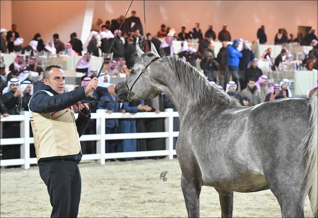 Junior Female Silver Champion: Mashhoora Al Shaqab (Ansata Nile Echo X Lian Al Shaqab)