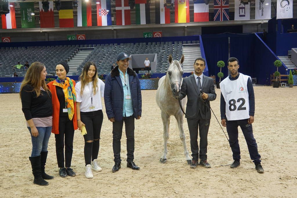 Silver Champion Jr. Colt Nydjik Des Aubues by Maximilian and out of Nirvana Des Aubues. Owned by Mr. Aboukhadija Abdelmajid.