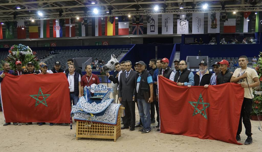 Gold Champion Sr. Stallion at the Salon du Cheval - El d'Jadida Morocco. TS Apolo - by TS Don Brave out of Fairness FHP. Owned by Haras Royal de Bouznik
