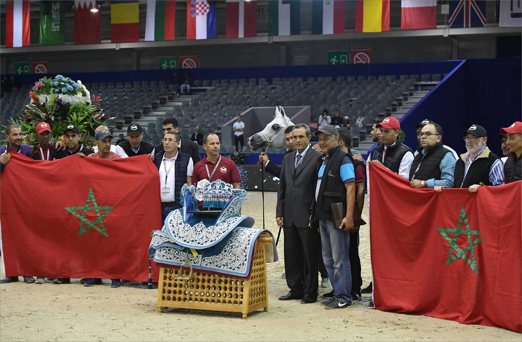 The International Arabian Horse Show