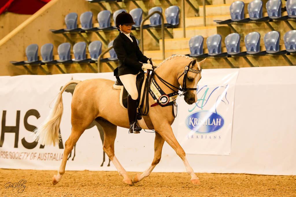 Australian Arabian National Championships 2018 Arabian Horses Stallions Farms Arabians Horses For Sale Arabian Horse Network