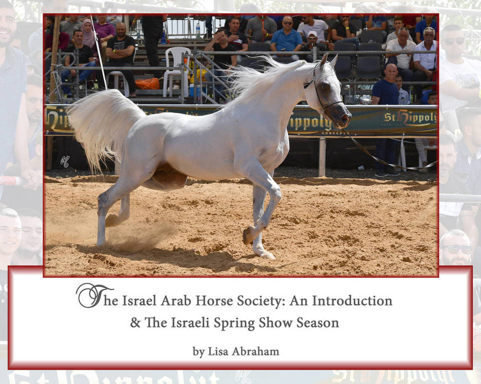 The Israel Arab Horse Society: An Introduction