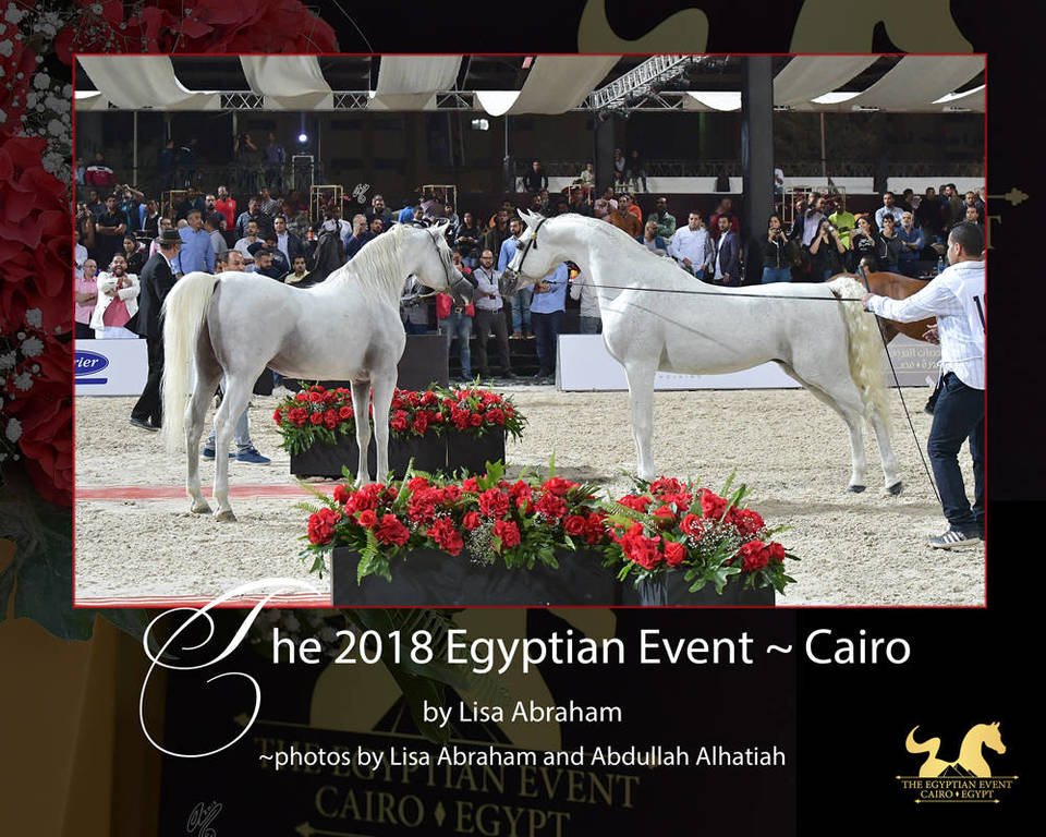 The 2018 Egyptian Event ~ Cairo: Innovation in Egypt