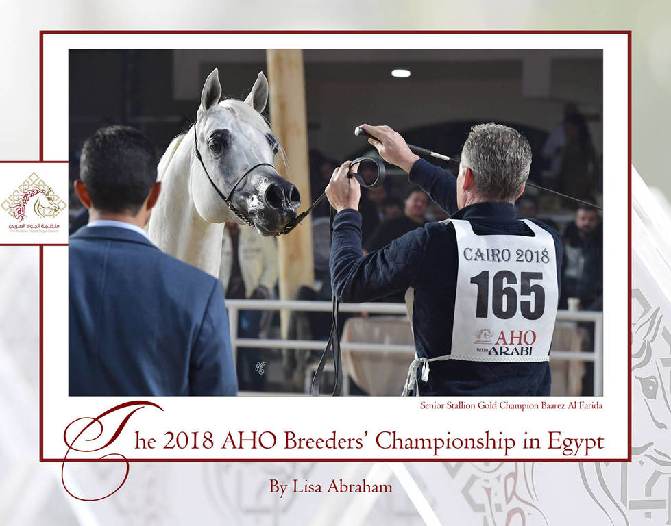 The 2018 AHO Breeders' Championship in Egypt