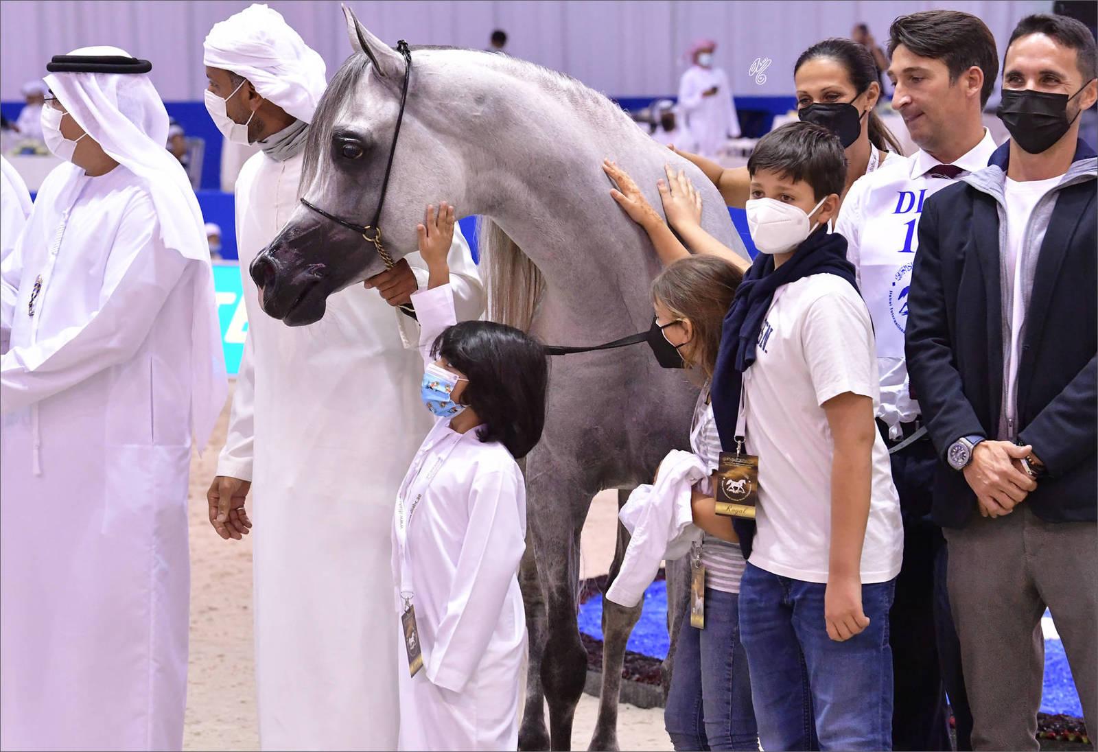 Senior Stallion Silver Champion: D Seraj (FA El Rasheem X Ladi Veronika)