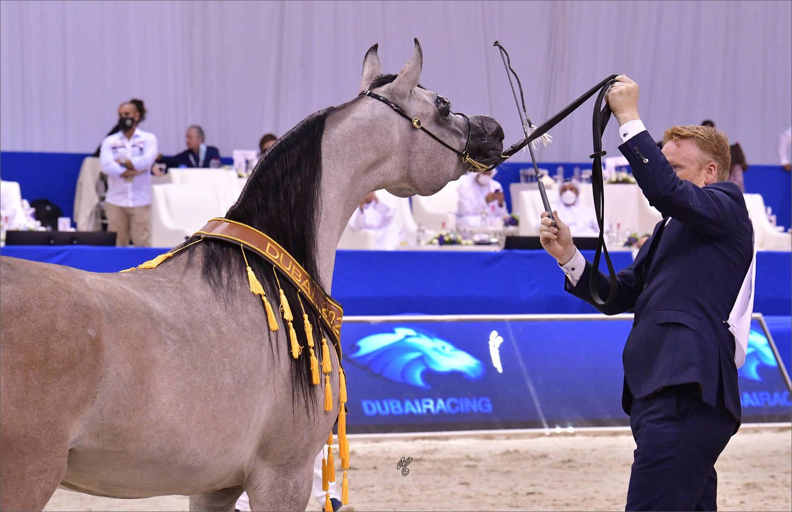 Junior Filly Gold Champion: Al Aryam Banafsaj (Dominic M X Al Aryam Basma)