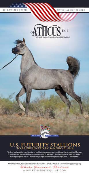 Atticus and Sandro Pinha - US Futurity Stallions