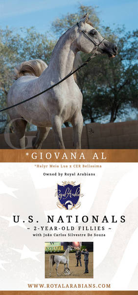 *GIOVANA AL  |  2-Year-Old Fillies