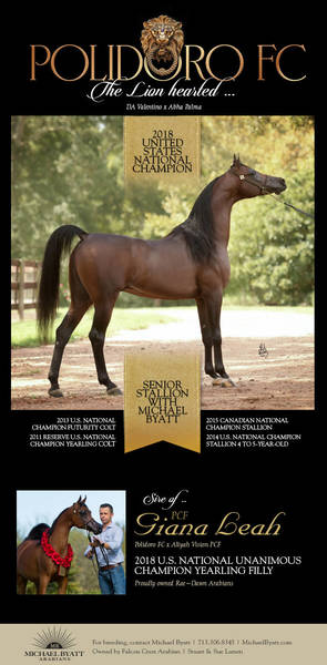 Polidoro FC - Book Your Breeding Today