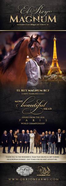 Paris Agreed - El Rey Magnum - Most Beautiful Head