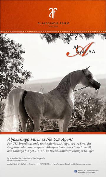 Aljassimya Farm: US Breeding agent for Al Ayal AA